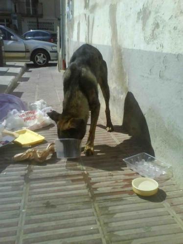 So helfen wir Tieren in Spanien.