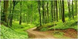 Auf der Suche nach dem Waldgeist