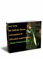 Die Indische Riesen-Gottesanbeterin (Hierodula membranacea)