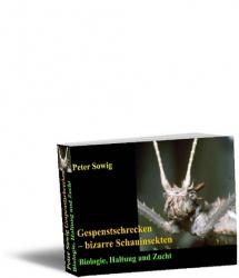 Gespenstschrecken – bizarre Schauinsekten