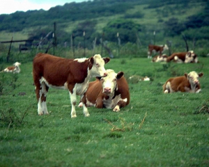 Nietzsche: Conquering the Herd Mentality