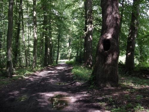 Der Geist des Waldes