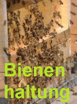Bienenhaltung - überlebenswichtig für jedermann