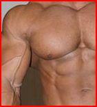 Der Ratgeber: Muskelaufbau Bodybuilding Training Ernährung