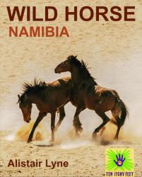 Namibia - Wild Horse