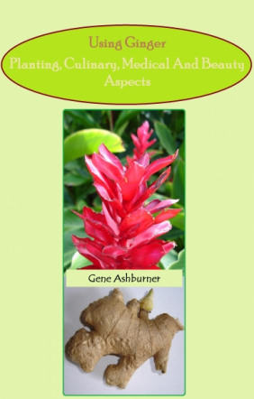 Using Ginger – Planting, Culinary, Medical And Beauty Aspect