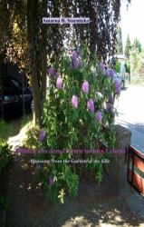 Blüten aus dem Garten meines Lebens