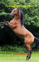 Paul und das wilde Pferd (Band 1)