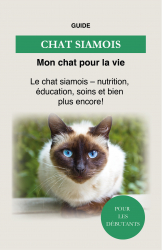 Chat Siamois