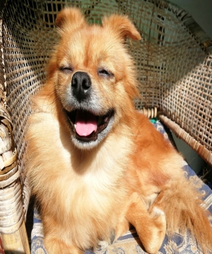 A Chinese dog named Blessing 1